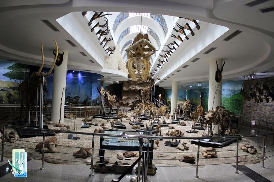 المتحف الحيواني بحديقة الحيوان